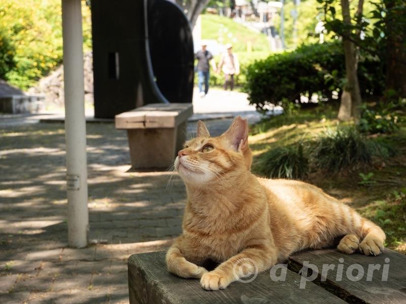 徳島県徳島市にある文化の森で涼む猫