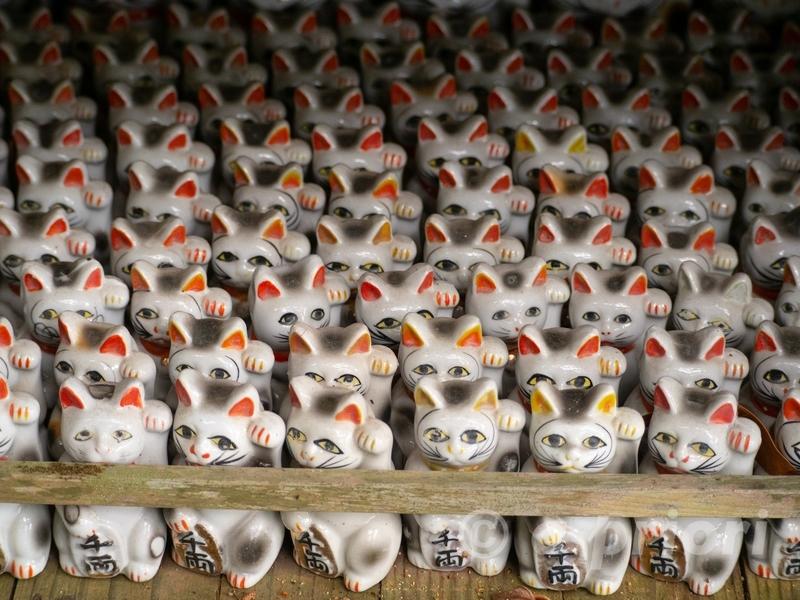 徳島県阿南市にあるお松大権現のずらりと並んだ招き猫