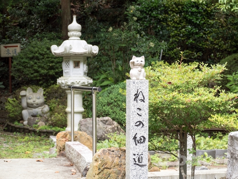 徳島県阿南市にあるお松大権現のねこの細道。招き猫の石像がある