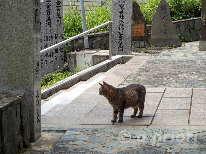 徳島県徳島市にある王子神社の境内に来た野良猫