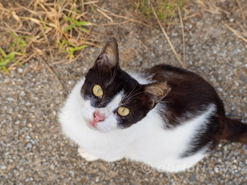サザンゲート公園のトイレの近くにいた猫。見上げた顔がかわいい
