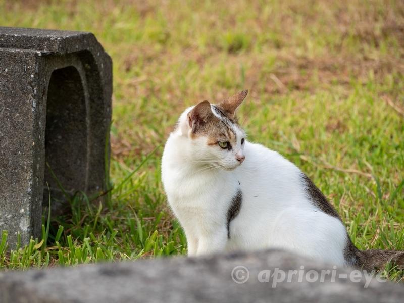 サザンゲート公園のトイレの近くにいた猫