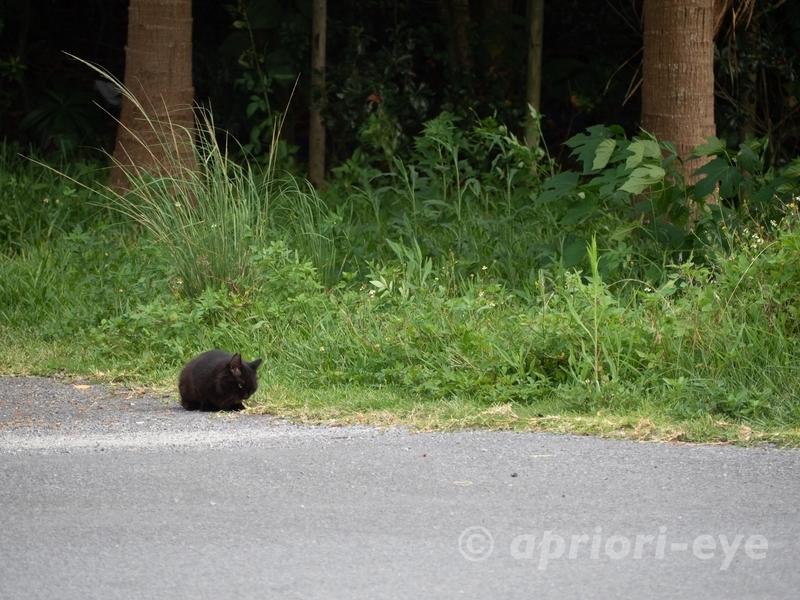 サザンゲート公園の階段から離れた所をテリトリーとする猫