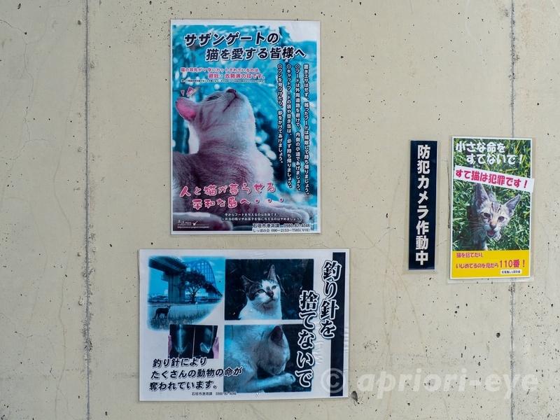 サザンゲート公園の捨て猫を警告する張り紙