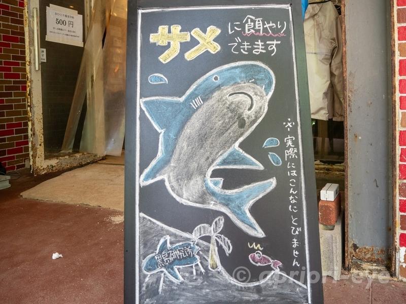 黒島研究所のサメにえさをやれることを案内する看板