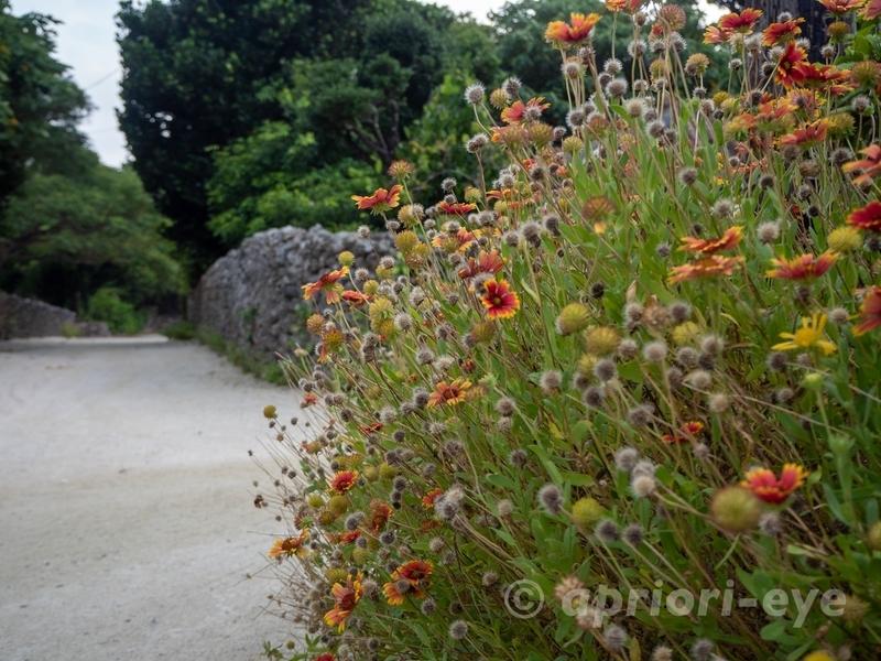早朝の竹富島の集落の路地の様子。花が美しい
