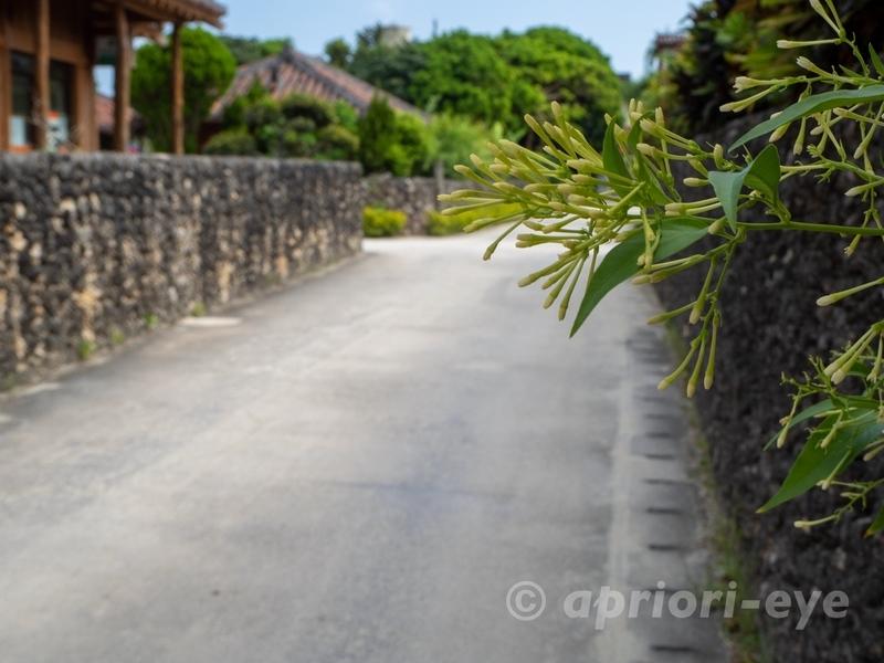竹富島の集落で早朝に撮影した人がいない路地
