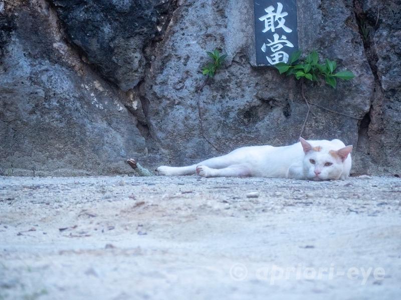 夕暮れ時の竹富島の集落の路地で寝転ぶ白い猫