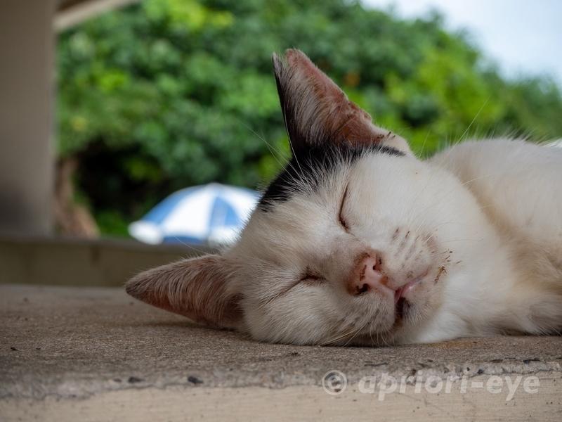 竹富島のコンドイビーチにある東屋で昼寝をする猫