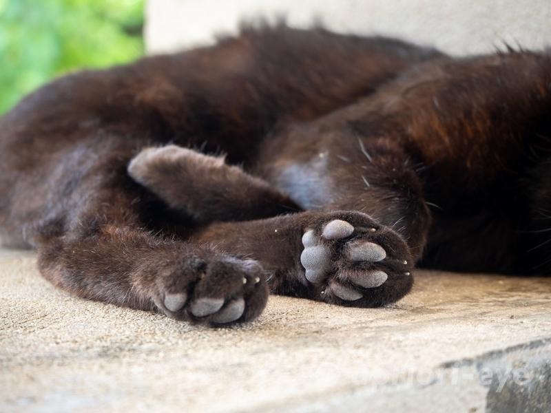 竹富島のコンドイビーチにある東屋で昼寝をする黒猫の肉球