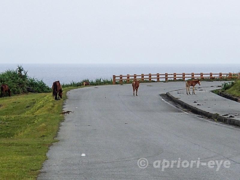 車道を闊歩する与那国島の馬