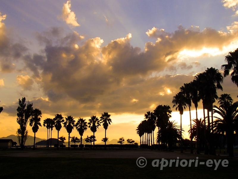 大久野島の夕日に染まったヤシの木