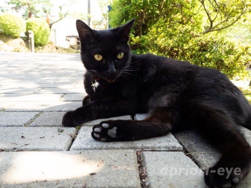 千光寺公園にいる黒猫のケンちゃん