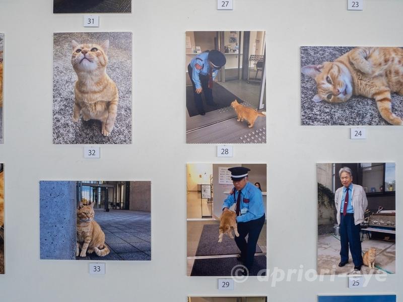 尾道市立美術館での警備員とゴッちゃんの攻防