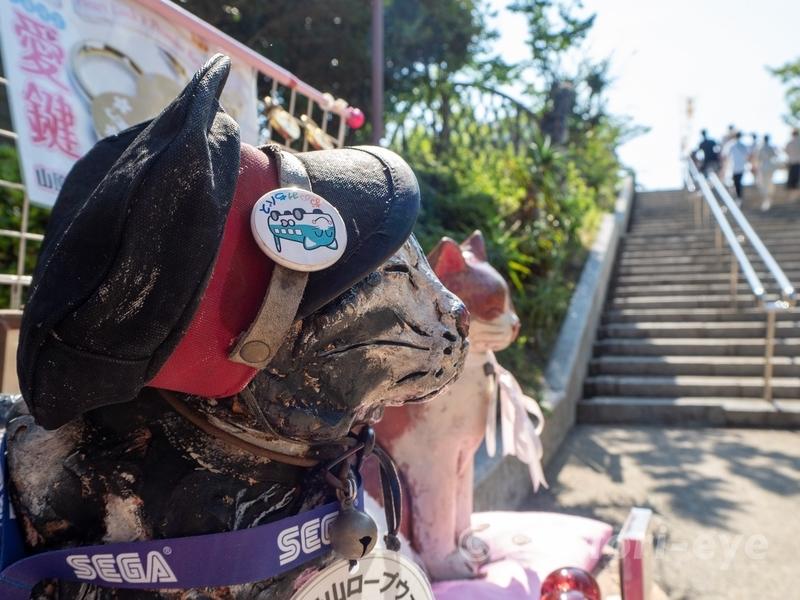 千光寺山ロープウェイの駅長である猫の恋会門(こいえもん)の横顔