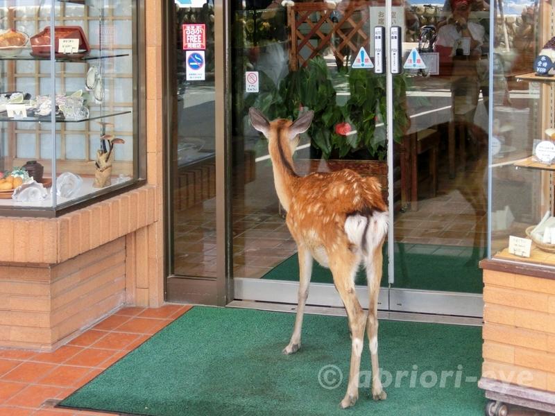 広島県にある宮島で外から飲食店の店内を覗く鹿