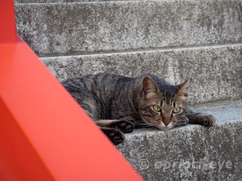 足利織姫神社の石段で寝ている猫