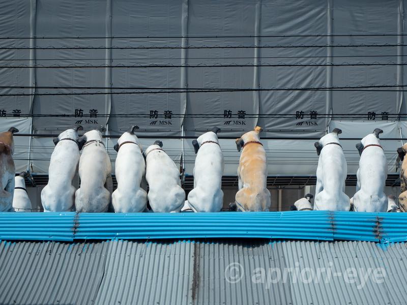 倉敷貯金箱博物館から倉敷犬の資料館へ移動する際に見える屋根の上の犬の後姿