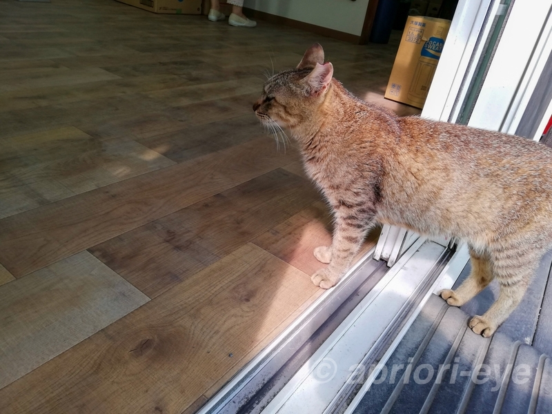 網地島ラインのフェリーが発着する石巻門脇港の猫