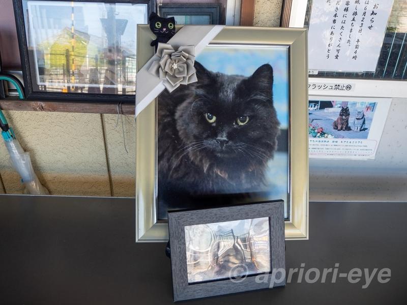 那珂湊駅の駅猫だった黒猫の「おさむ」