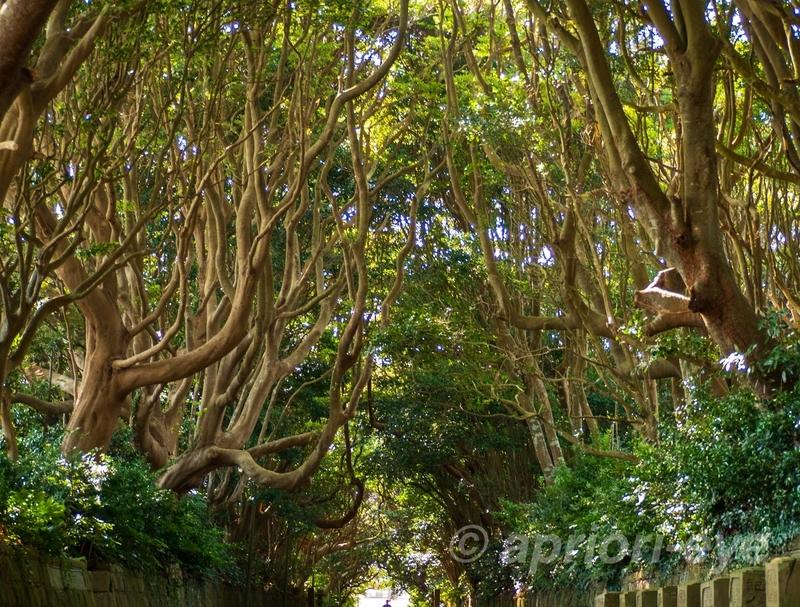 酒列磯前神社の木々が生い茂った樹叢