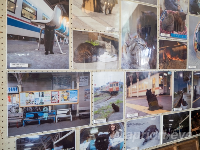 那珂湊駅の待合室に飾られている猫の写真