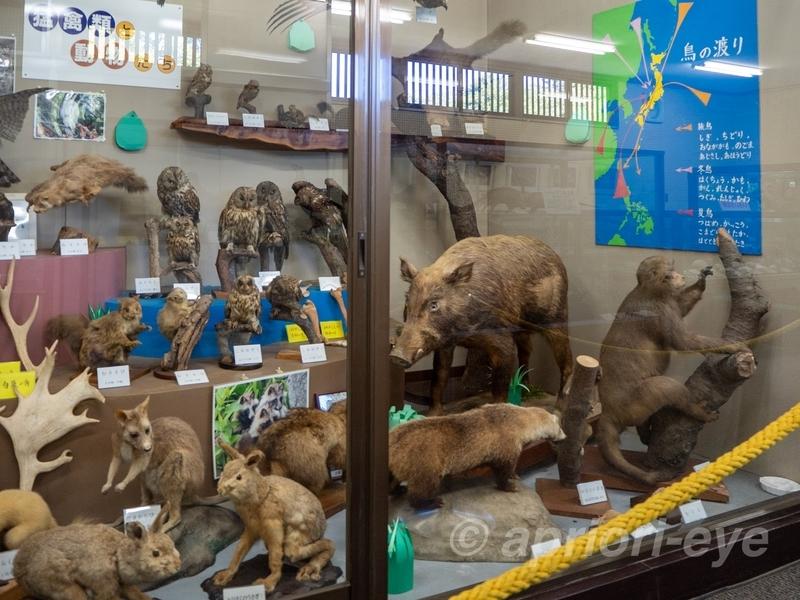 高岡古城公園自然資料館に展示されている動物のはく製