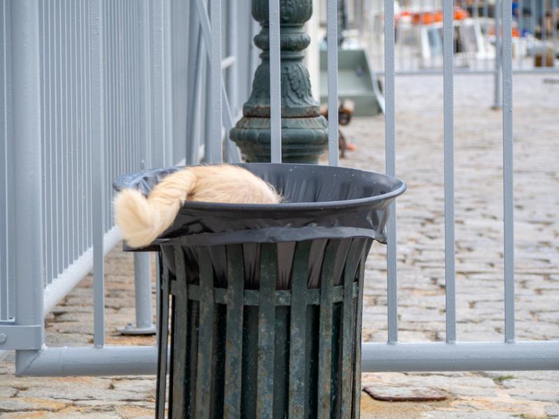 イドラ島の港周辺で、早朝、ゴミ箱をあさる猫