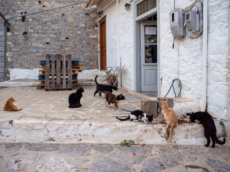 野良猫にスーパーK(Super K)で売っているキャットフードを与えるイドラ島の住民