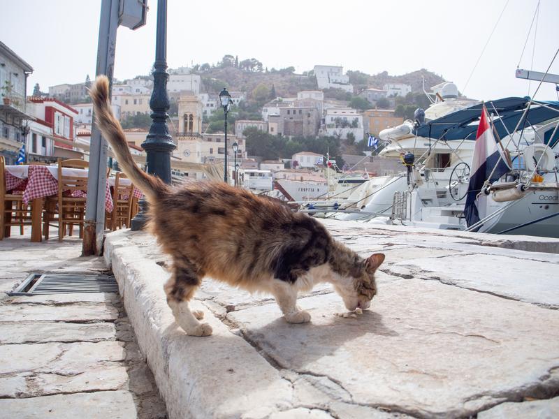 イドラ島の港でえさを食べる猫