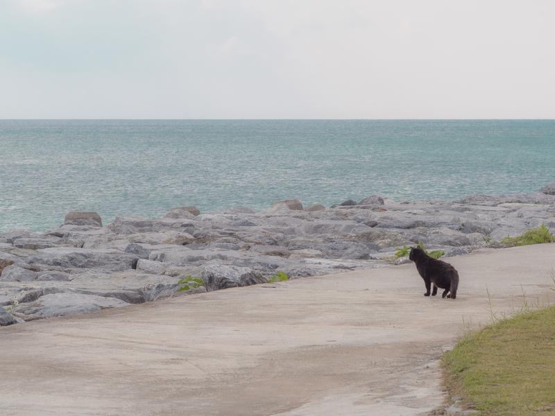 名護市の海岸にいた黒猫
