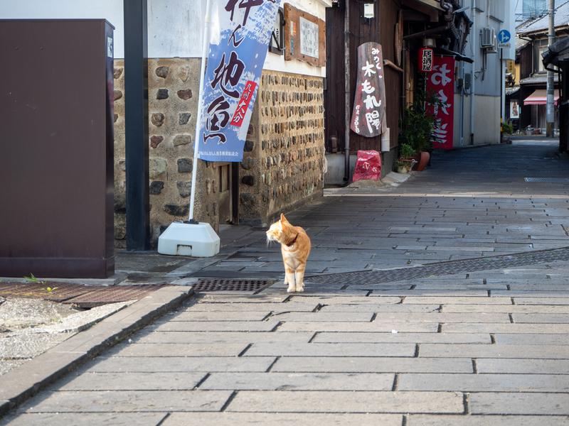 臼杵市にある二王座歴史の道。猫がいる