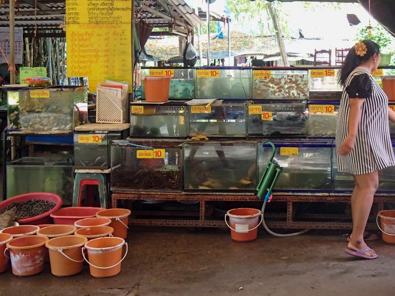 タンブン用に売られている水槽に入った魚
