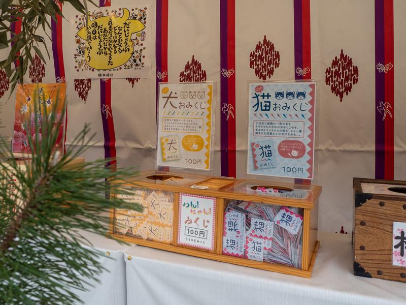 櫻木神社の犬や猫が描かれたおみくじ