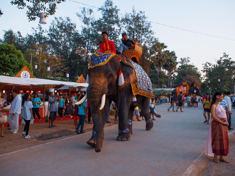 スコータイ遺跡公園のロイクラトン祭りの会場内を歩く象
