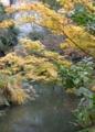 温泉街足湯:楓黄葉