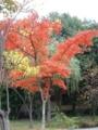 温泉街足湯:落葉樹
