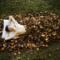 枯葉の寢床
