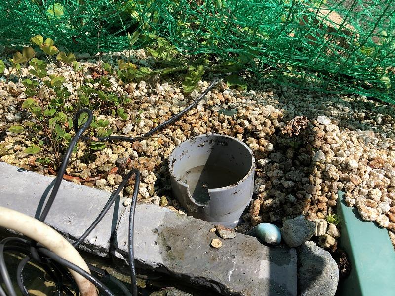 プラ舟ビオトープ(ソーラーポンプのポンプ室)