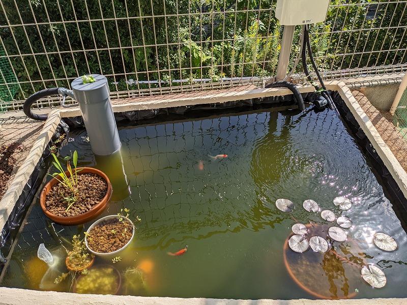 庭池DIY(台風一過)