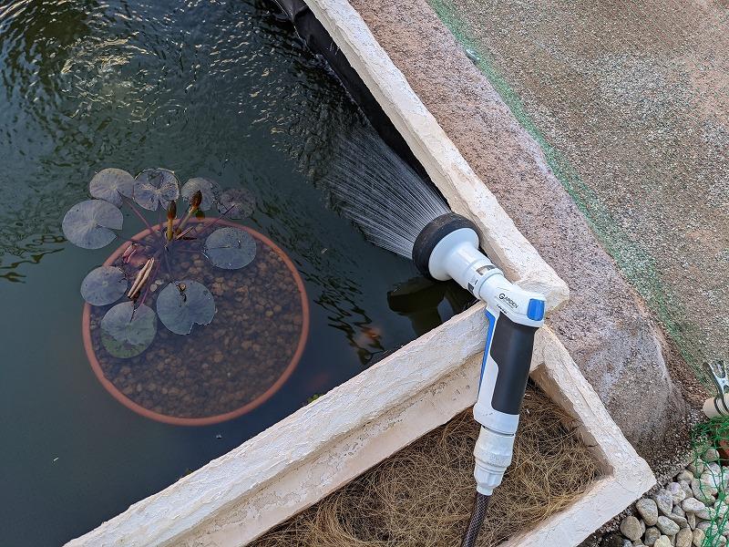 庭池DIY 睡蓮追肥