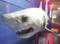 【ブログから】サメ展