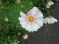 f:id:a_sue:20111022142144j:image:medium