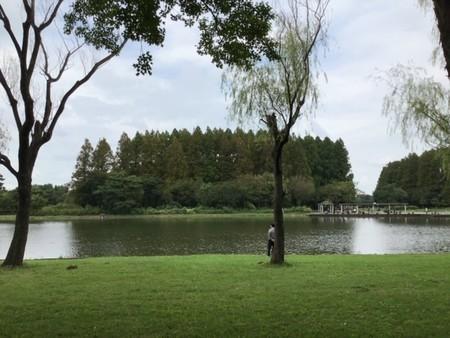 みさと公園から見た水元公園