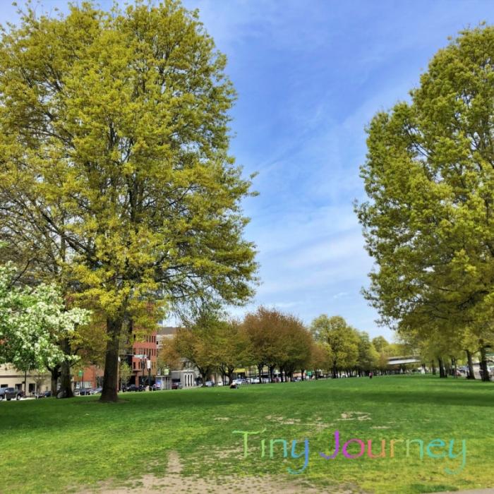 大きな木のある緑地