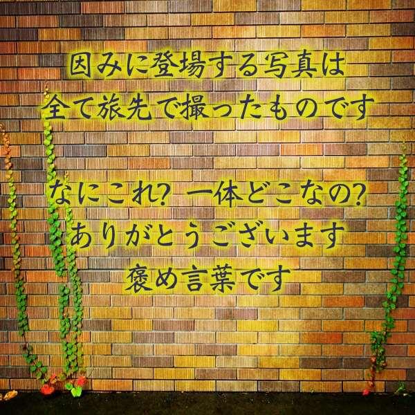 蔦の這うレンガの壁