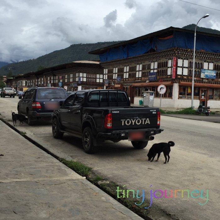 街中を徘徊する犬