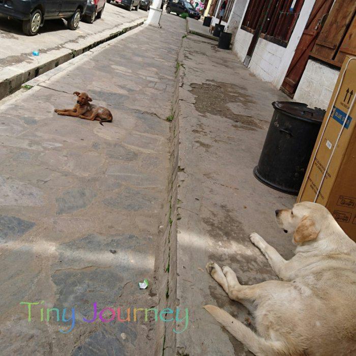 道端でくつろぐ犬たち