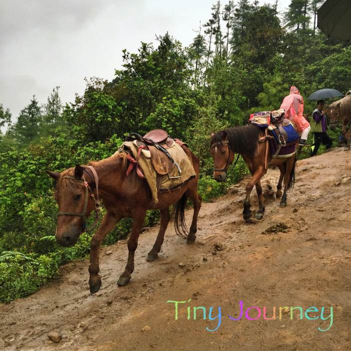 山道を歩く馬たち