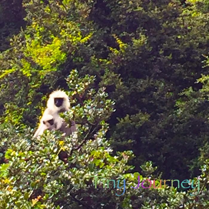 木の上からコチラを見るサルの親子